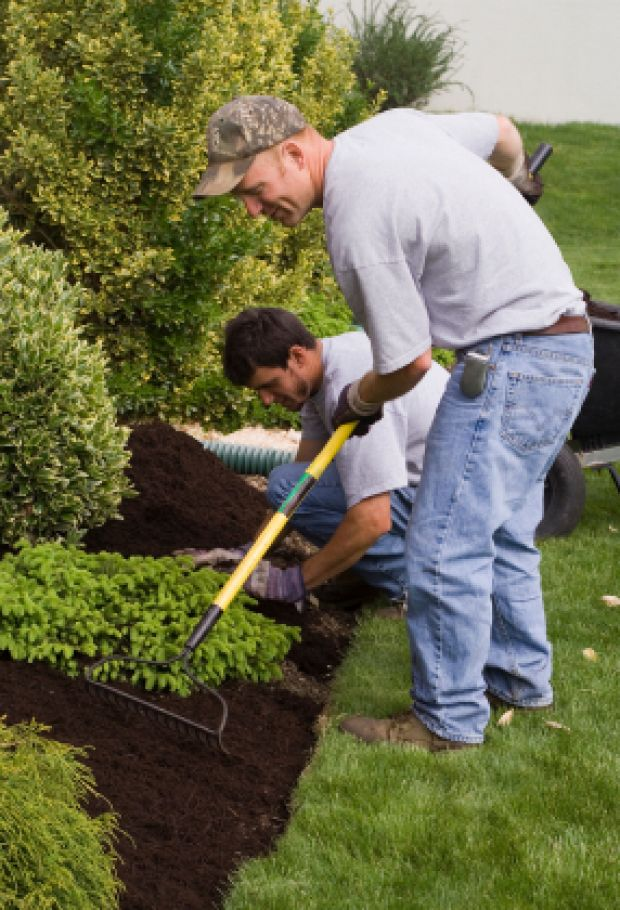 Garden maintenance carlow co carlow wexford kilkenny for Tree and garden services